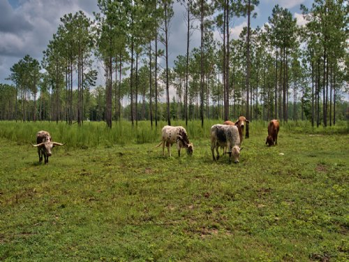 Working Cattle Farm For Sale : Monticello : Jasper County : Georgia