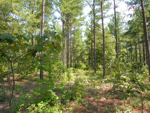 170 Acres, 2 Homes, Wooded, Stream : Sparta : Hancock County : Georgia