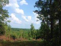 42+/- Acres Lee Road 71 : Auburn : Lee County : Alabama