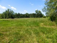 40 Acres Timber And Crp : New Salem : Pike County : Illinois