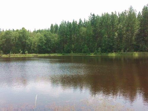 Mercer Lake : Alamo : Wheeler County : Georgia