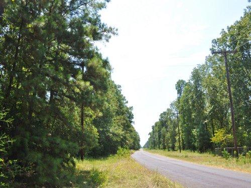 104 Acres Mangum Road : Livingston : Polk County : Texas