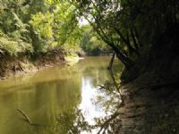 Conecuh River Hunting Land
