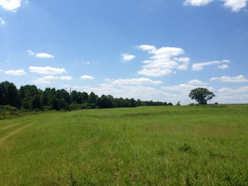 78 +/- Ac : Brundidge : Pike County : Alabama