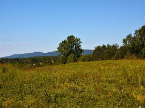 Cobham Forest 29 Acres : Keswick : Albemarle County : Virginia