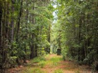162 Acres Camp Seale Road : Livingston : Polk County : Texas