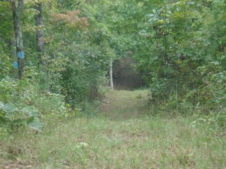 120 Ac Timber Investment : Goodwater : Coosa County : Alabama
