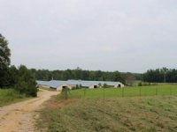 Four House Broiler And Cattle Farm