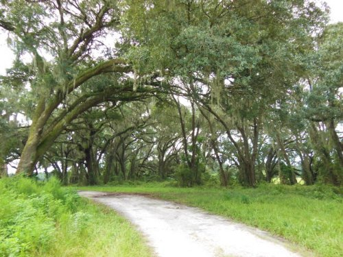 903 Acre Beautiful Old Farm : Chiefland : Levy County : Florida