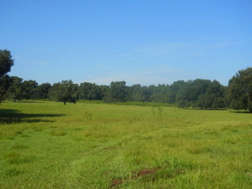 128 Acres - Price Reduced : Lake City : Columbia County : Florida