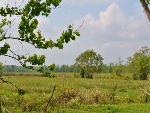 535 Acres Cr 2068 : Moss Hill : Liberty County : Texas