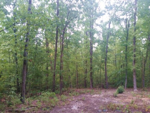 Unrestricted Acres : Arvonia : Buckingham County : Virginia