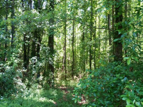 116 Acres Timberland Franklin, Ga : Franklin : Heard County : Georgia