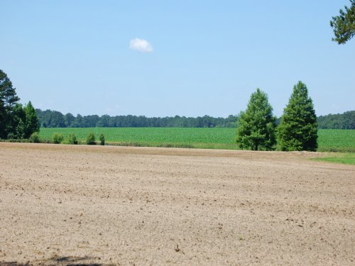 Whigham Farm : Cairo : Grady County : Georgia