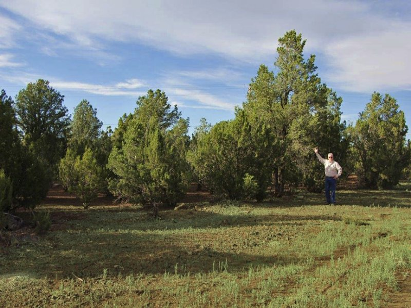 Northern Arizona Forested Cabinsite : Vernon : Apache County : Arizona