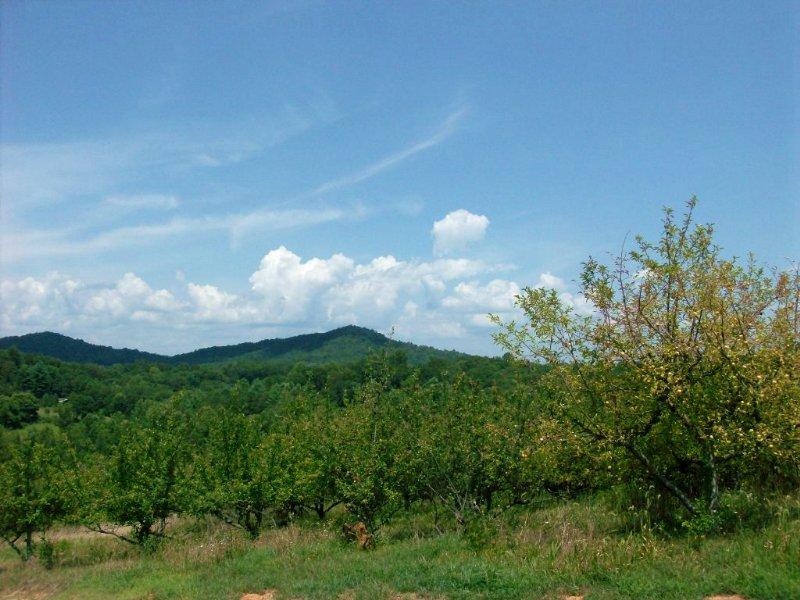 Almost 7 Acres Of Land : Lakemont : Rabun County : Georgia