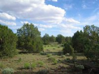 36 Acre Wilderness Freedom Ranch