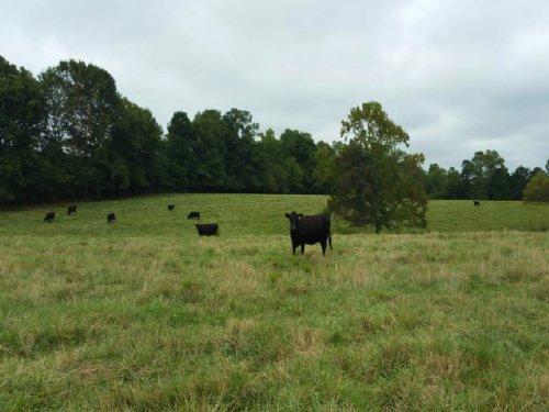 47+/- Acre Cattle Farm Tyus : Bowdon : Carroll County : Georgia
