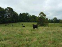 47+/- Acre Cattle Farm Tyus