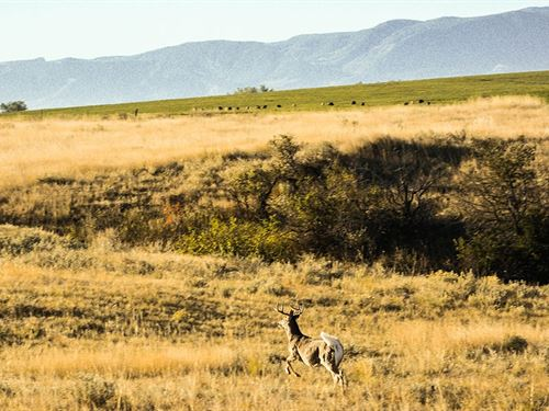 Jorgenson-Mydland Ranch : Sheridan : Wyoming