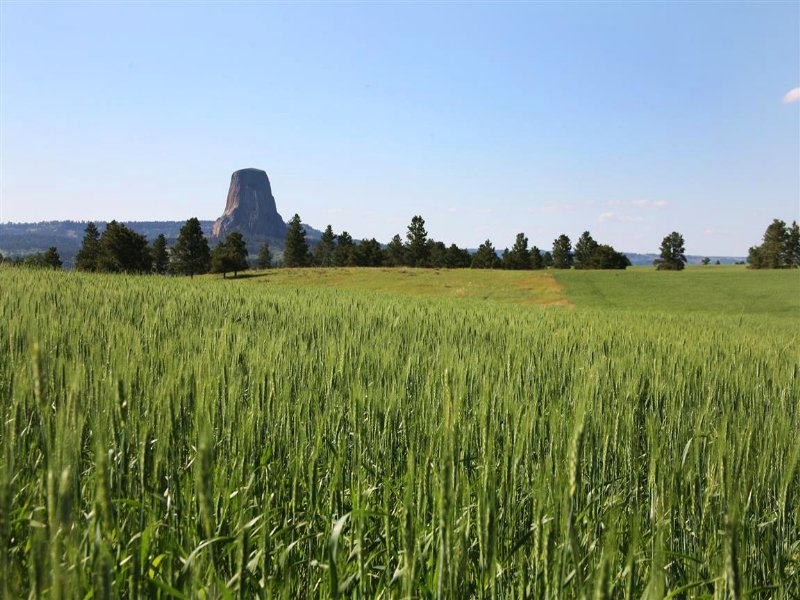Tower View Ranch Middle Parcel : Devils Tower : Crook County : Wyoming
