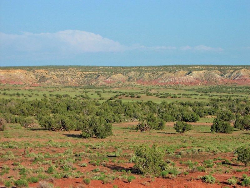 37 Acre Northern Az Ranch : St. Johns : Apache County : Arizona