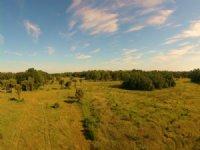 Sand Hill 40 Acres : Okeechobee : Okeechobee County : Florida
