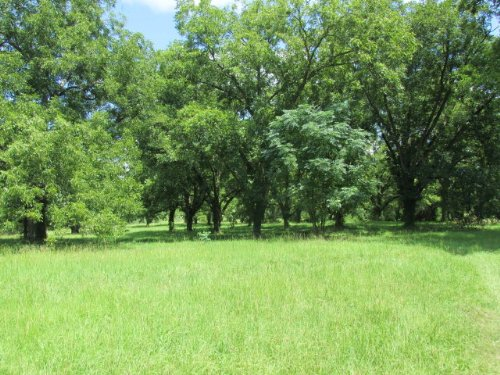 49+ Acres, Farm Land, Residential : Lincolnton : Lincoln County : Georgia