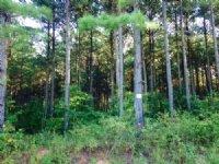 11.49 +/- Wooded Acres, Buchanan