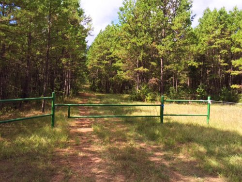 94 Acres Fm 323 : Alderbranch : Anderson County : Texas