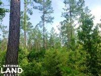Georgetown Hunting & Timber Land