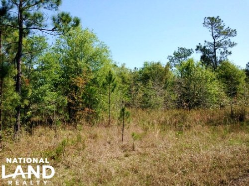 48.79 Acre Recreational Timber Trac : Waverly : Camden County : Georgia