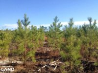 Receational Timber Investment