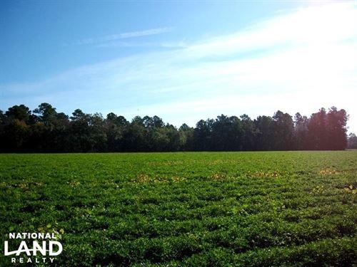 Country Homesite Or Mini Farm : Nichols : Horry County : South Carolina