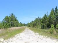 Bonneau Hunting & Timber Land : Bonneau : Berkeley County : South Carolina