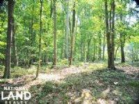Recreational Homesite & Timber Inve