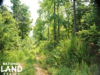 Randolph County Recreational Timber