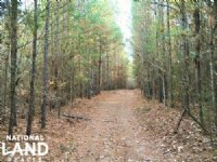 Timber Investment & Hunting Land