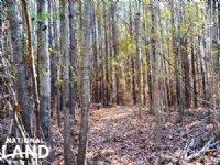 High Falls Hunting & Timber Homesit