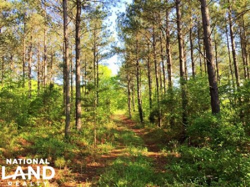 Recreational Timber Tract With Cabi : Lafayette : Walker County : Georgia