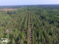Recreational Timber Investment in : Yulee : Nassau County : Florida