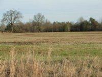 15 Acres - Level Land