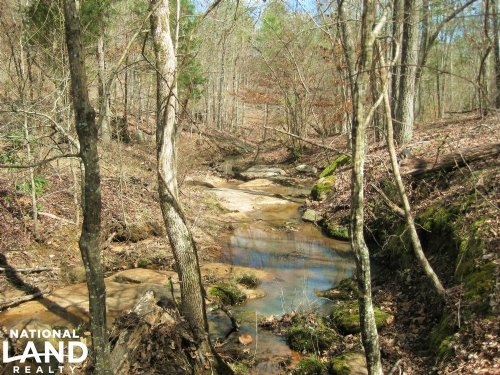National Forest Hunting Land : Carlisle : Union County : South Carolina