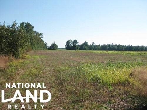 89.5 Acre Timber & Farming Tract in : Bishopville : Lee County : South Carolina