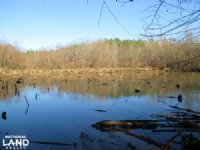 Rabon Creek Hunting & Timber Land : Laurens : Laurens County : South Carolina