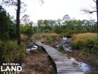 Pamlico Sound Hunting & Timber Cons