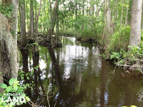 Congaree Hunting And Timber Land : Eastover : Richland County : South Carolina