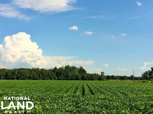 Equestrian And Recreational Land : Kingstree : Williamsburg County : South Carolina
