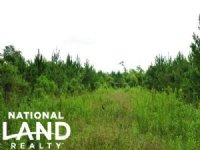 Large Acre Timber & Hunting Tract