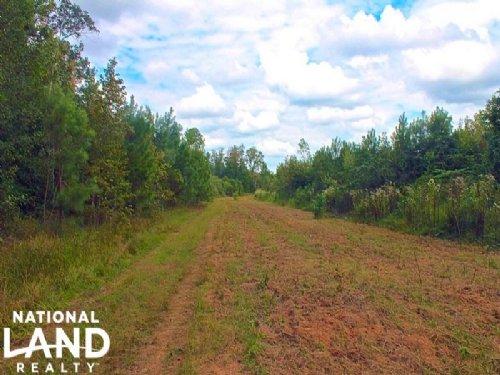 Beaverdam Creek Hunting & Timber Tr : Centerville : Perry County : Alabama